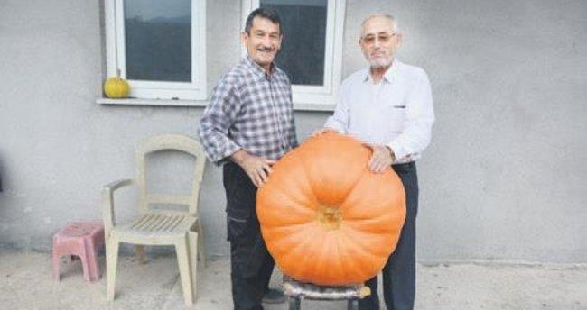 90 kiloluk bal kabağı yetiştirdi