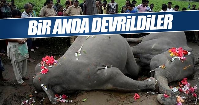 Elektrik çarpan 2 fil hayatını kaybetti