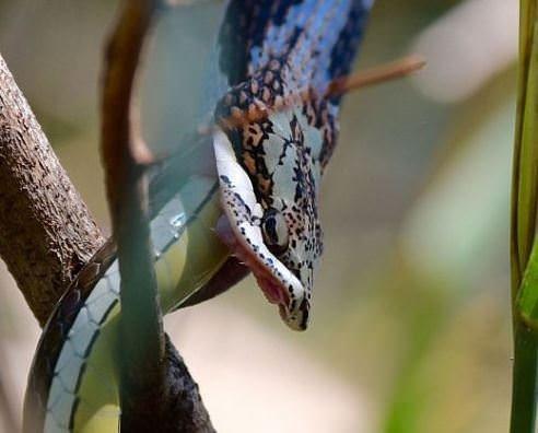 Yılanların dehşet saldırıları