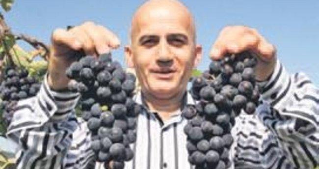 Karadeniz'in kokulu üzümleri tescillendi