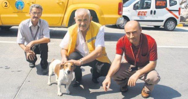 Havaalanında kaybolan köpek apronda bulundu