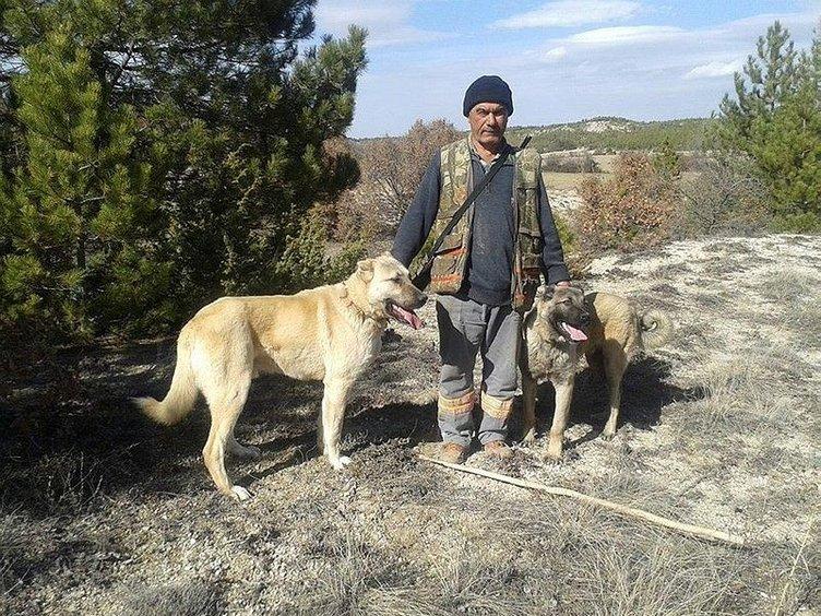 Çobanların güvencesi Kangal köpekleri