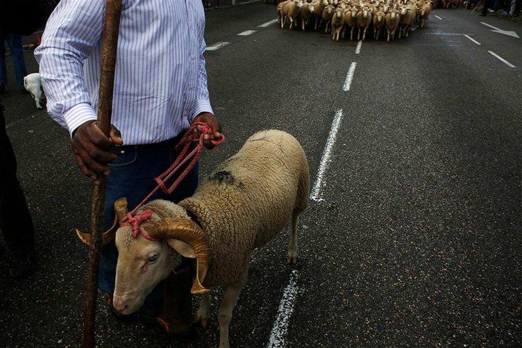 Koyunlar Madrid'den geçti
