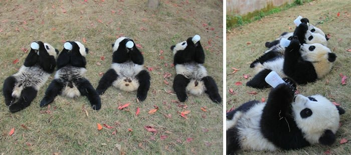 Pandalara günlük bakım