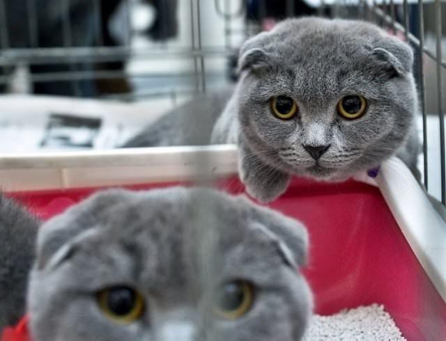 Kediler, güzellikleriyle yarıştı