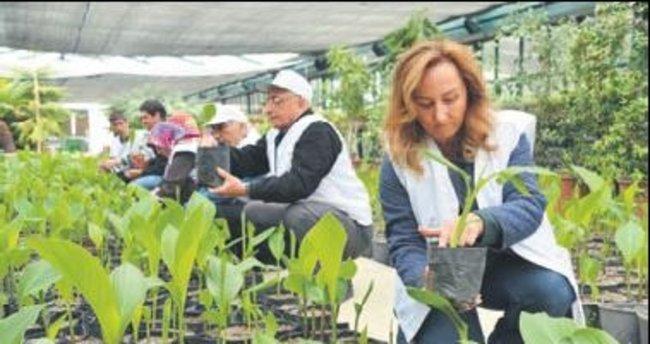 Bahçıvanlık kursunda kayıtlar bugün başlıyor