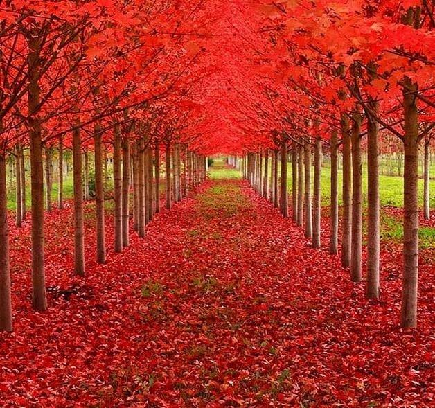 Daha önce görmediğiniz muhteşem güzellikte 26 ağaç