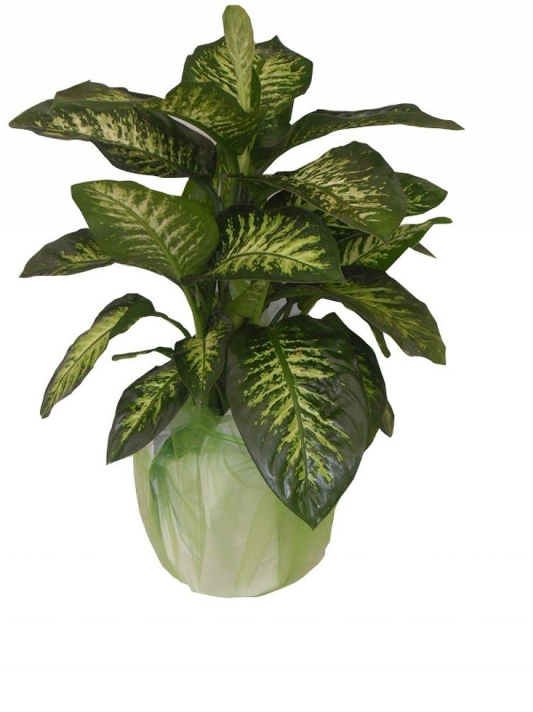 Bu bitkiyi evinizden ve çocuklarınızdan uzak tutun