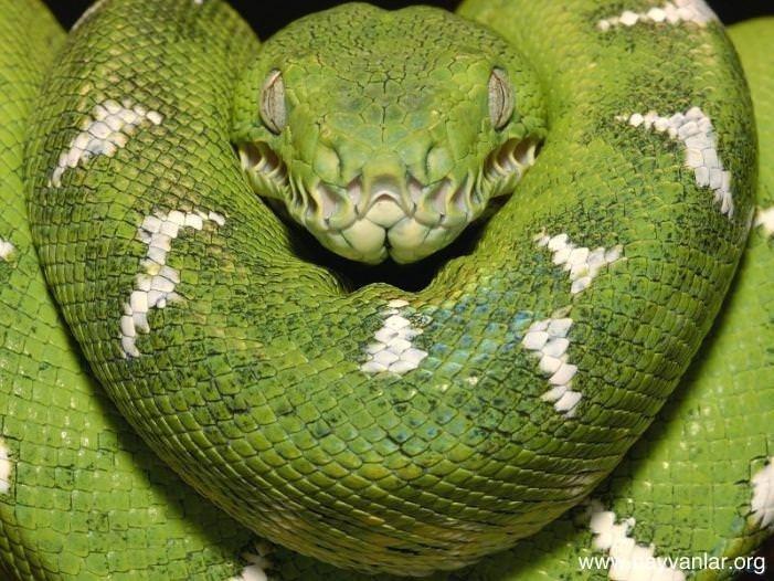 Yılanlar hakkında 10 ilginç bilgi