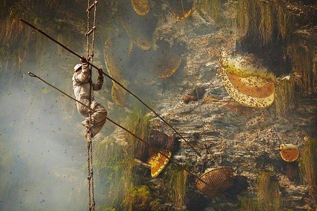 Nepal yerlilerinin arılarla bal savaşı!
