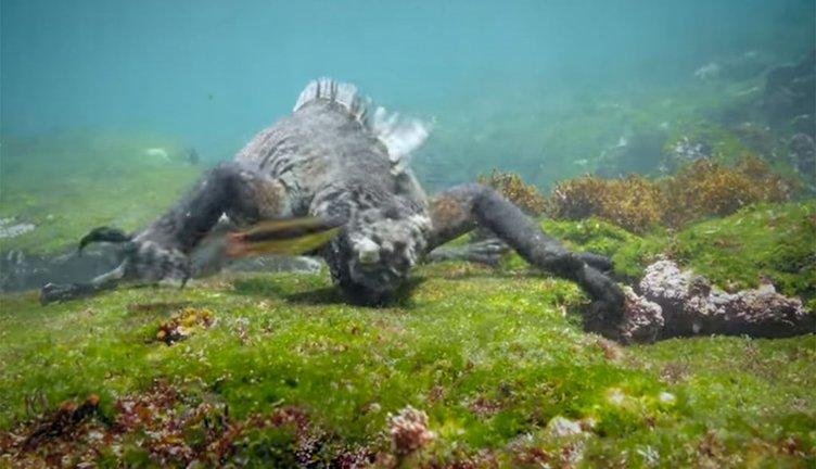 Su altında 6 metrelik dev kertenkele!