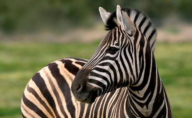 Hayvanların bilinmeyen muhteşem özellikleri
