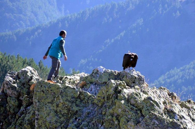 Tedavi edilen akbaba doğaya salınamadı