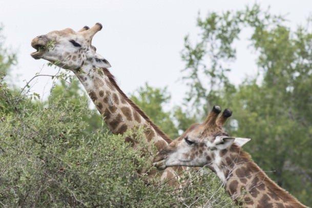 Kruger Milli Parkı'ndan muhteşem kareler