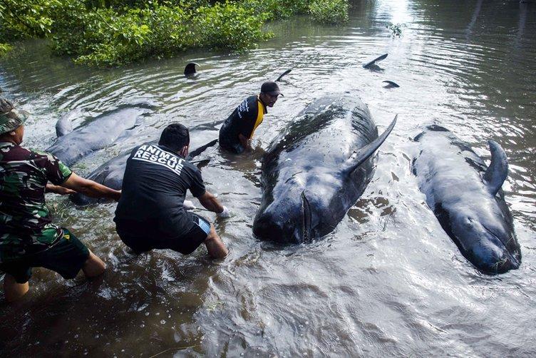 32 balina karaya vurdu!