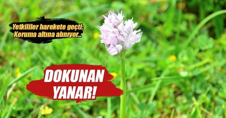 Orkideler koruma altına alınıyor