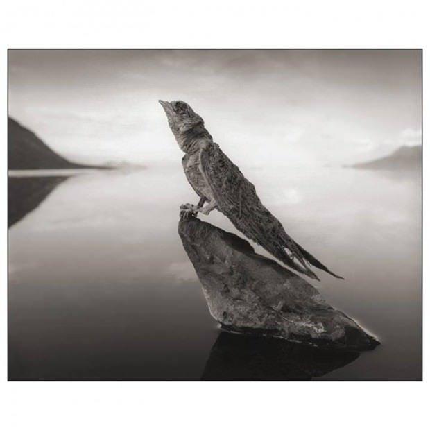 Canlıları taşa çeviren göl
