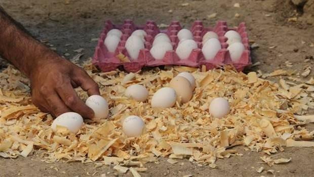 Bu yumurtanın tanesi 30 lira