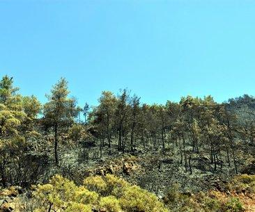 Türkiye'de 14 yılda 3 milyar 750 milyon ağaç...
