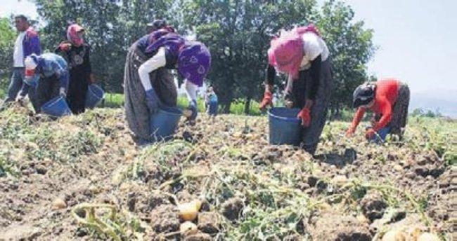 Patatesin destek dışı kalması çiftçiyi üzdü