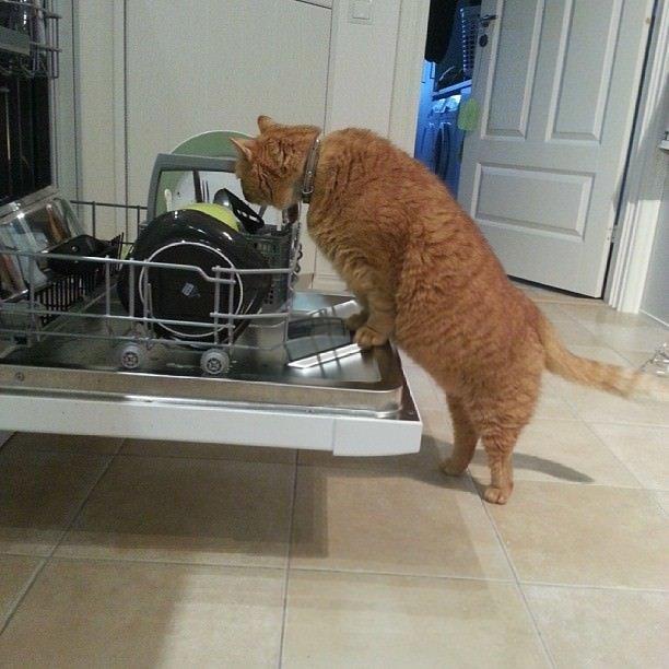 Yardımsever kediler!