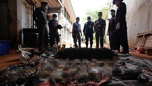 Tayland: Budist tapınağında 40 ölü kaplan yavrusu