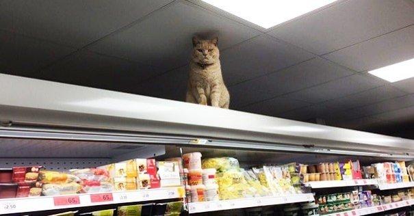 Marketten çıkmayan kedi!