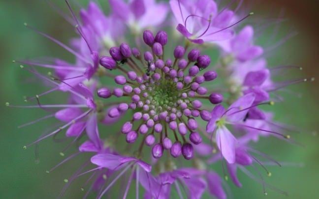 Bal arılarıyla ilgili şaşırtan gerçek