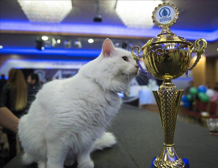 4. Ankara Kedisi Güzellik Yarışması