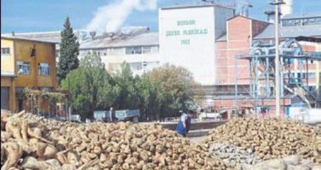 Burdur'da pancar alım kampanyası başlıyor