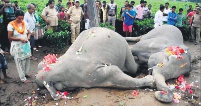 Ölen fillere çiçekli uğurlama