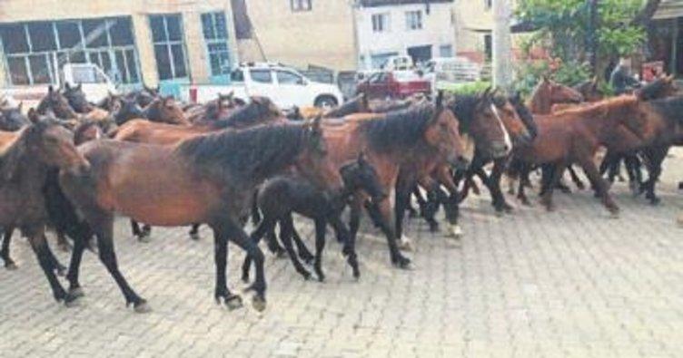 Ödemiş'te başıboş atları toplandılar