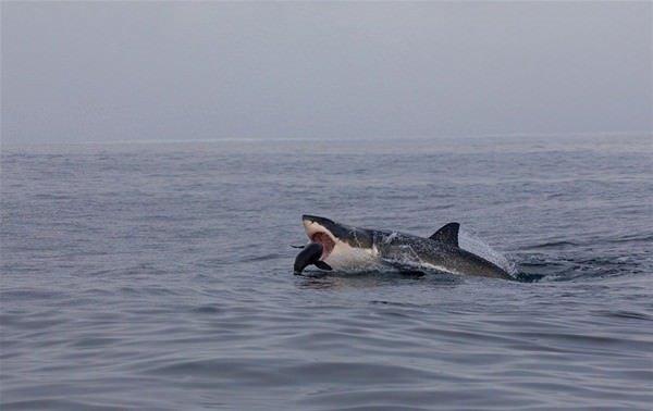 Katil balinadan korkunç av!