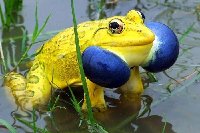 Hayvanların renkli dünyası