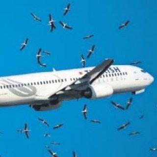 Kuş sürülerine karşı göç alarmı