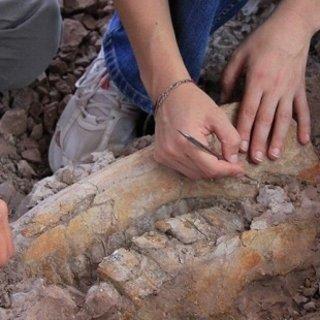 Ayağı takıldı, 1 milyon yaşında fosil buldu