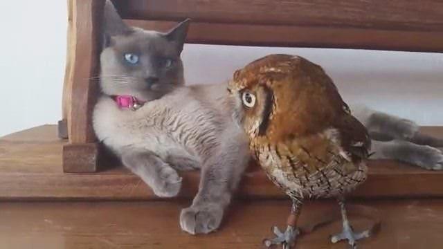 Hayvanların şaşırtan ve ilgi çeken dostluk kareleri