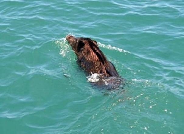 Denizden çıkıp vatandaşı kovaladı