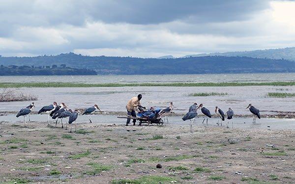 Etiyopya'daki Awassa gölü