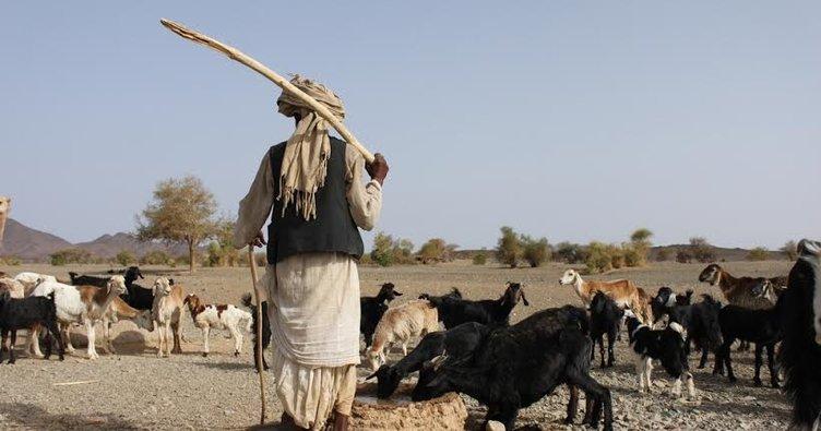 Nijerya'da çobanlar ve çiftçiler arasında çatışma!