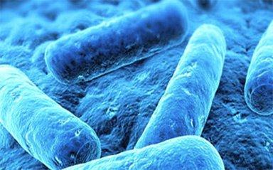 Bu bakteriye dikkat!