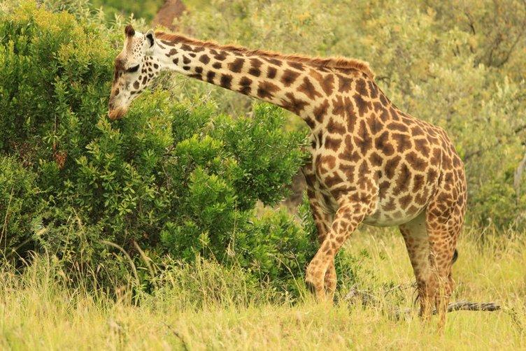 Safariden çok özel fotoğraflar
