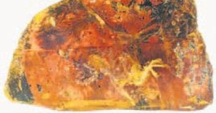 Kehribar taşından kuş fosili çıktı