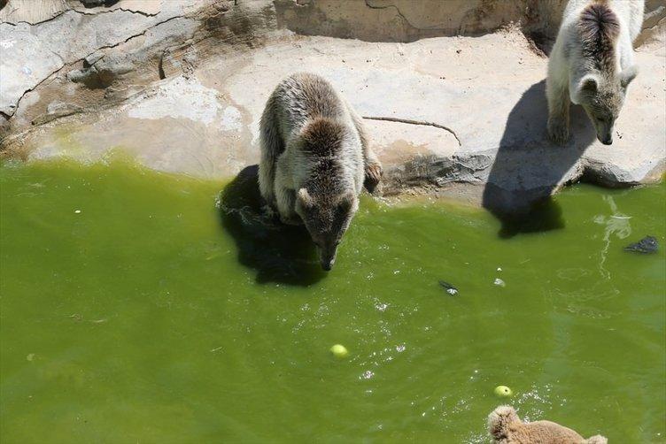Sıcak hava hayvanat bahçesi sakinlerini etkiledi