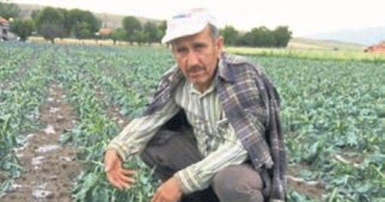 Dolu yağışı tarım alanlarını vurdu