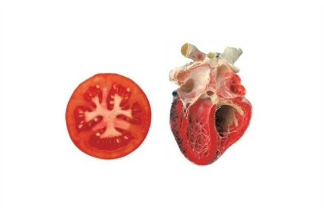 Hangi besin hangi organa benziyor?