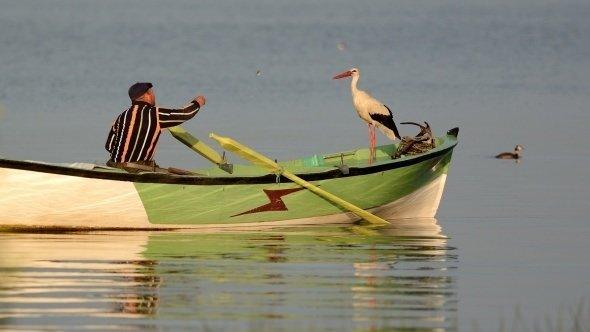 Balıkçı ile leyleğin dostluğu