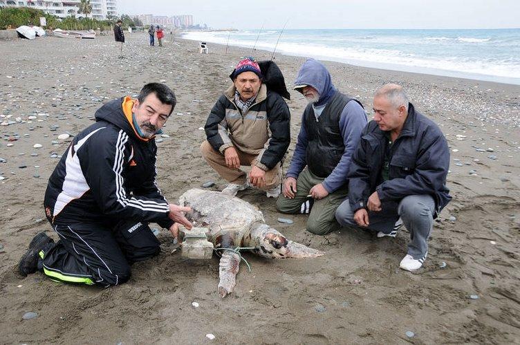 Caretta'yı yüzgecine taş bağlayıp denize attılar