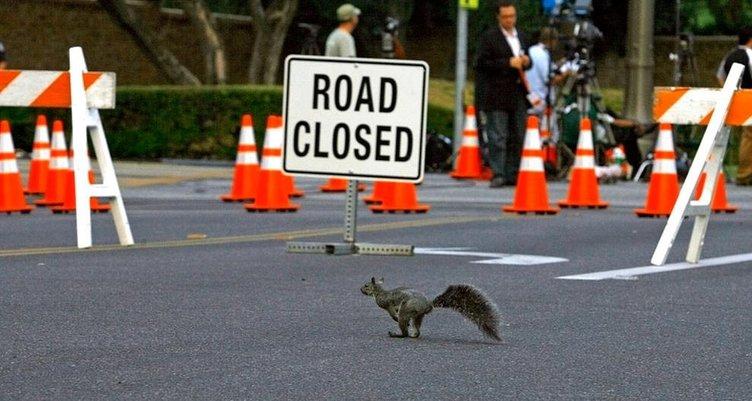 Caddedeki vahşi hayat