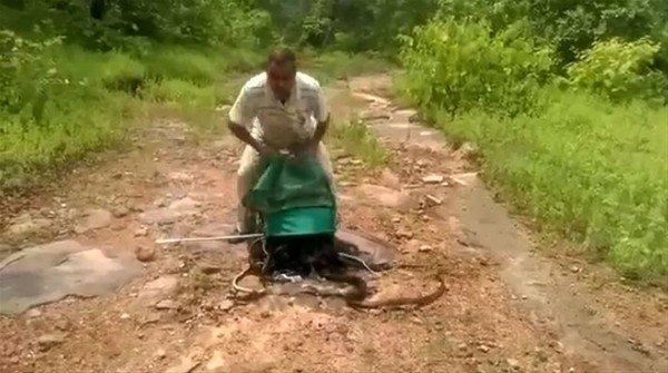 O bir yılan avcısı!